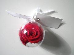 Rose_eternelle_20.jpg
