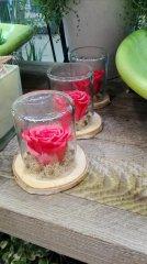 Rose_eternelle_46.jpg