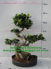 Bonzai_006.jpg
